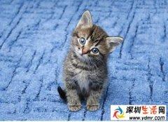 猫鼻子灵敏吗-嗅觉最灵敏的动物是什么?