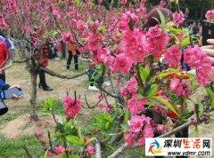 深圳38个春游好去处!赏花、爬山、放风筝。。
