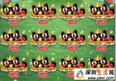 淘宝理想猫30级12只合成方 淘宝怎么叠12只30级猫