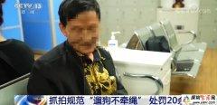 上海遛狗不牵绳行为将被抓拍处罚 具体会怎么处罚?